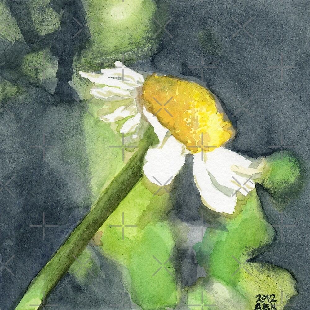 Chamomile by Amy-Elyse Neer