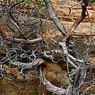 manzanita branches by rmenaker