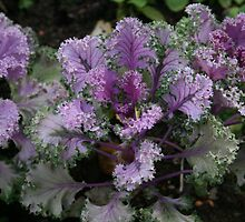 Kale by Sharon Selby