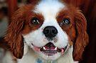 Those sad puppy eyes by Renee Hubbard Fine Art Photography