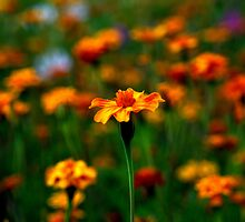 The temple bell stops but I still hear the sound coming out of the flowers. by Ritu Lahiri