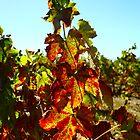 Autumn wine by Monique Basson