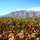 What a view! by Monique Basson