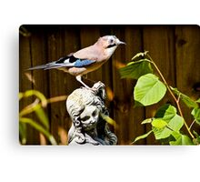 The Stunning Jay......... Canvas Print