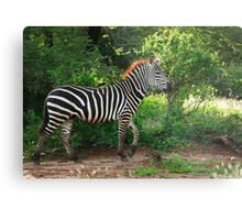 Out for a Stroll Metal Print