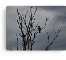Raven silhouetted against grey sky Canvas Print