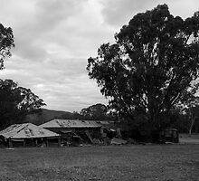 The Old Shearing Shed - II by rflower