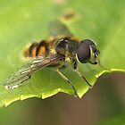 The Bee's Knees! by John Thurgood