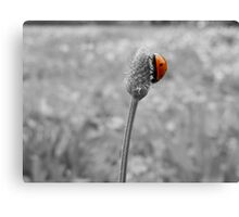 LADYBUG AND CLOUDY DAY Canvas Print