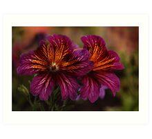 Flowers of Alberta  Art Print