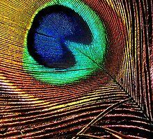 Peacock colors by Muhammad Tariq Mahmood Ahmad