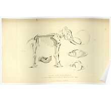 The Animal Kingdom by Georges Cuvier, PA Latreille, and Henry McMurtrie 1834 619 - Mammalia Mammals Poster