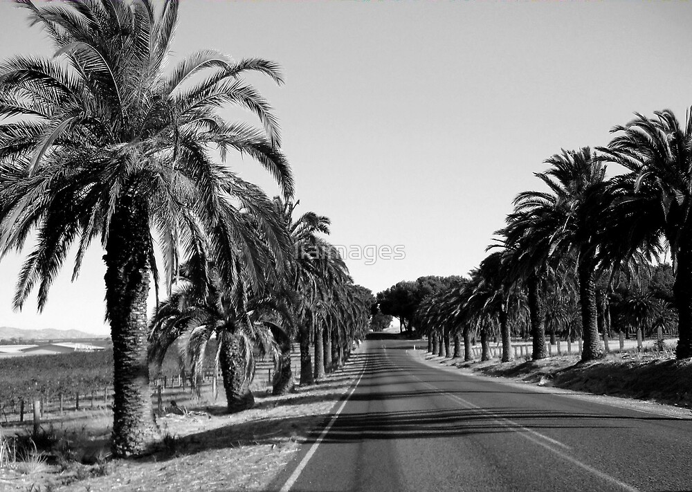 Palms by the roadside by liaimages