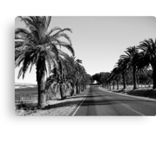 Palms by the roadside Canvas Print