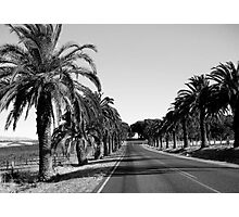Palms by the roadside Photographic Print