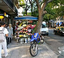 Pavement florist, Buenos Aires by Maggie Hegarty