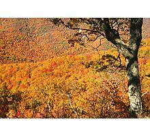 Fall Foliage, Shenandoah National Park Photographic Print