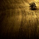 A Ploughed Field by rosedew
