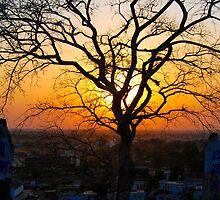 A Sunset & A Tree by Neha  Gupta