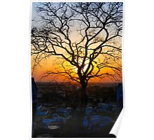 A Sunset & A Tree Poster