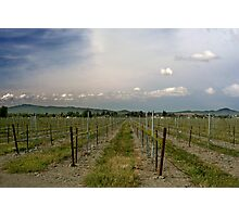 The Vineyard Photographic Print