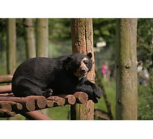 The Spectacled Bear Photographic Print