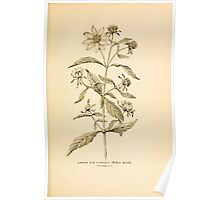 Harper's Guide to Wild Flowers 1912 Creevey, Caroline and Stickney, Alathea 078 Larger Bur Marigold Poster