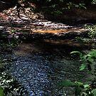 Cahaba River by Mike Pesseackey (crimsontideguy)