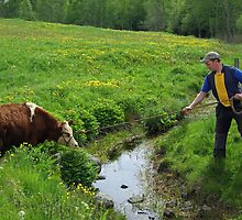 The farmer and one of his bullocks by Paola Svensson
