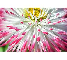 Hot Tips! Photographic Print