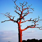 Red Tree by lousutherland