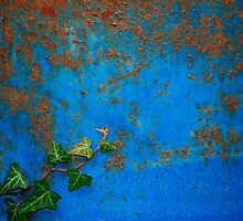 Ivy Against Blue Rusted Oil Drum by jojobob