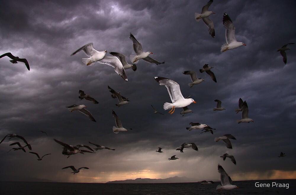 Seagull Storm by Gene Praag