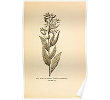 Harper's Guide to Wild Flowers 1912 Creevey, Caroline and Stickney, Alathea 104 Salt Marsh Fleabane Poster