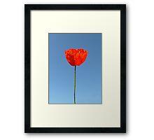 Poppy in the Sky Framed Print