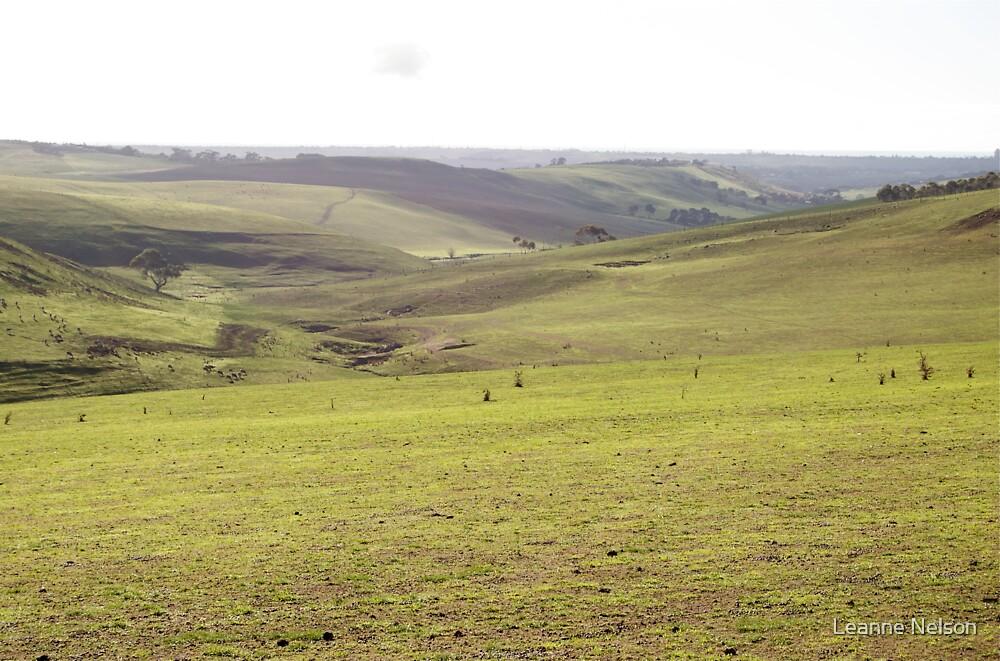 Barrabool Farmland by Leanne Nelson