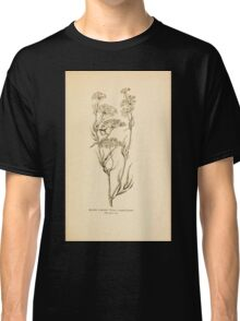 Harper's Guide to Wild Flowers 1912 Creevey, Caroline and Stickney, Alathea 030 Water Parsnip Classic T-Shirt