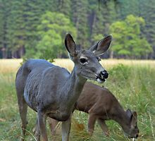 deer meadow,  Yosemite by Christopher Barton