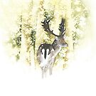Stag by Ray Shuell