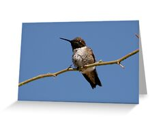 Black Chinned Hummingbird Greeting Card