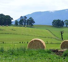 Gentle Hills of East Tennessee by raindancerwoman
