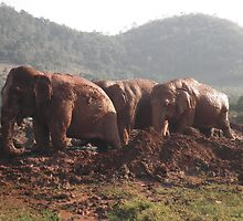 Happy, Healthy,FREE Elephants. by Hazeljaynejones