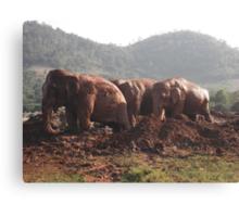Happy, Healthy,FREE Elephants. Canvas Print