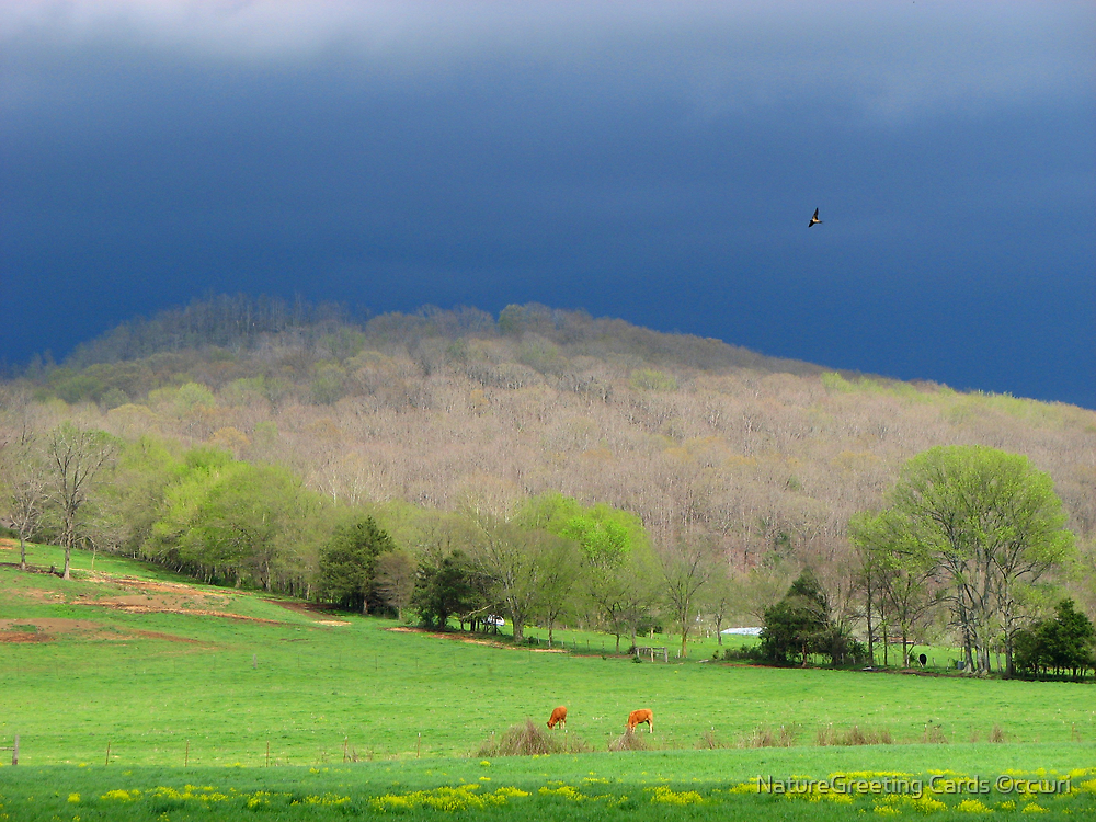 Storm On The Horizon by NatureGreeting Cards ©ccwri