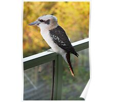 A kookaburra against yellow foliage Poster