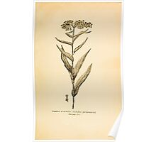 Harper's Guide to Wild Flowers 1912 Creevey, Caroline and Stickney, Alathea 114 Purple Milkweed Poster