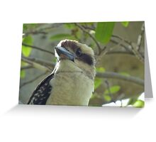 Kookaburra at Sydney's Bradleys Head Greeting Card