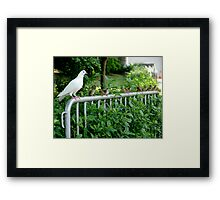 Birds of a feather? Framed Print