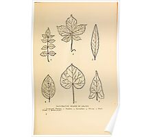 Harper's Guide to Wild Flowers 1912 Creevey, Caroline and Stickney, Alathea 002 Leaf Shapes Poster