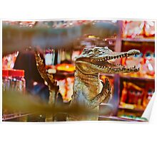 Praying Crocodile Poster